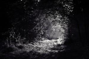 Dschungelfieber Nachtwanderung @ Leutershausen | Bayern | Deutschland